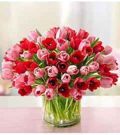 Tulips Sweetest Love