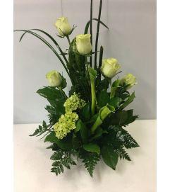 Green Calla Lilies