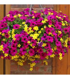 "10"" Mixed Hanging Annual Basket"