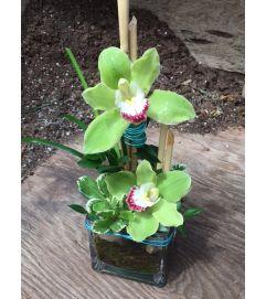 Admin Week Special - Oriental Orchids