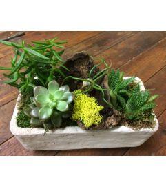 Succulent Oasis Planter