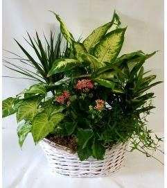 English Garden Planter #6