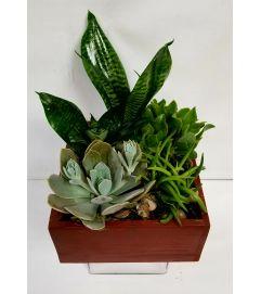 Succulents #6