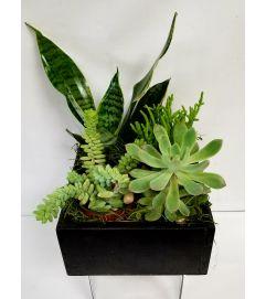 succulents #7