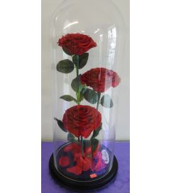ENCHANTED ROSES RED TRIO