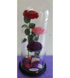 ENCHANTED ROSE MIX TRIO