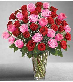 Long Stem Pink & Red Roses