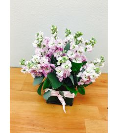 Scented Pink Stock Floral Arrangement