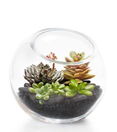 Succulent Terrarium