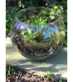 Ellingtons Bubble Bowl Terrarium