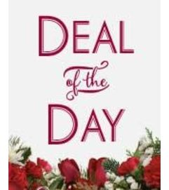 Winter Deal of the Day
