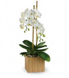 Opulent Orchids - by Jennifer