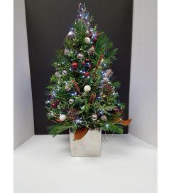A Fresh christmas tree
