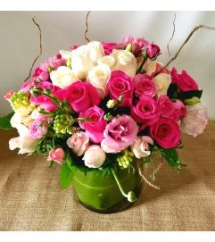 Spring Pink Ranunculus