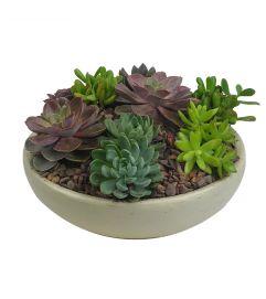 Large Succulent Garden
