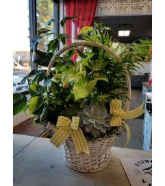 White basket succulent & plant garden