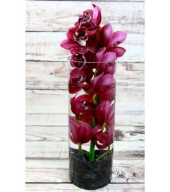 Orchid Sensation