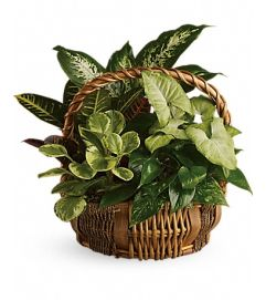 Emerald Basket