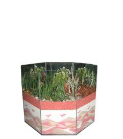 Creative Cactus Garden