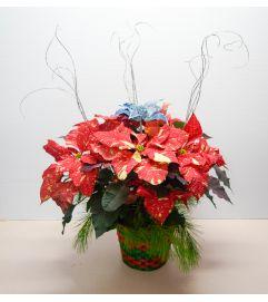 Marble Poinsettia Basket