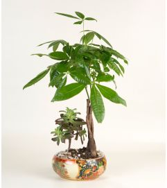 Money Tree with Succelent