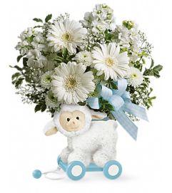 Sweet Baby Boy Lamb