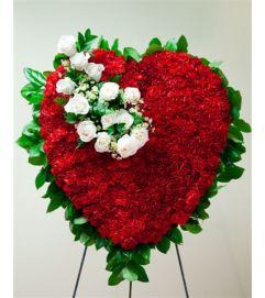 Red Bleeding Heart