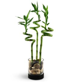 Bamboo Bliss