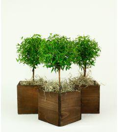 Decorative Plant in Box