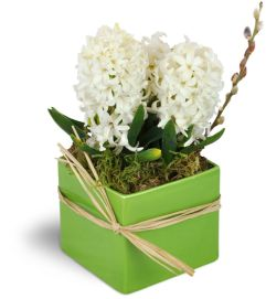 White Hyacinth Planter™
