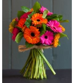 Colorful  Gerbera Daisies Bokay