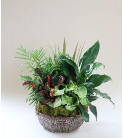 Midtown Florist Custom Dish Garden