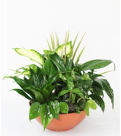 Lush Green Planter by DiBiaso
