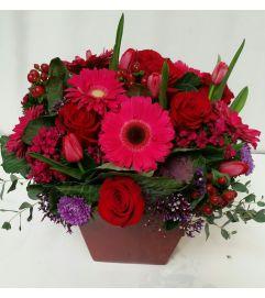 Lovely  Red