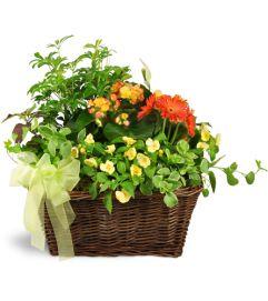 Springtime Sympathies Garden Basket™