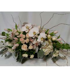 Stylish White Orchid