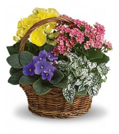 Spring Mixed Basket