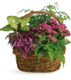 Mixed Dish Garden Basket