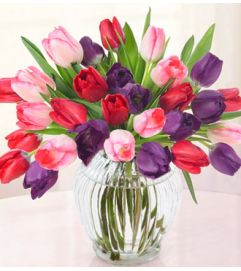 Lovely Tulips