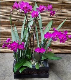 Purple Orchid Garden #1