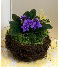African Violet in Twig Nest