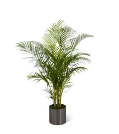 The FTD® Palm