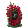 Royal Rose Surround