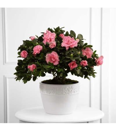 The FTD® Vibrant Sympathy™ Planter