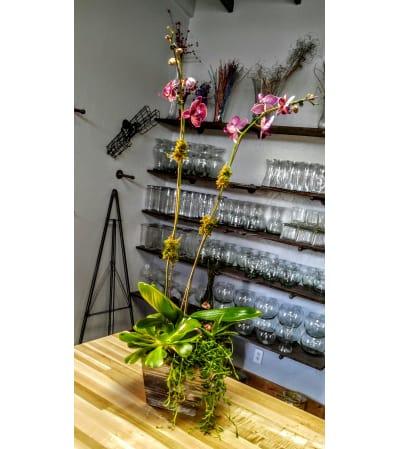 Urban Orchid Planter