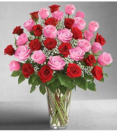 Three Dozen Pink & Red Roses