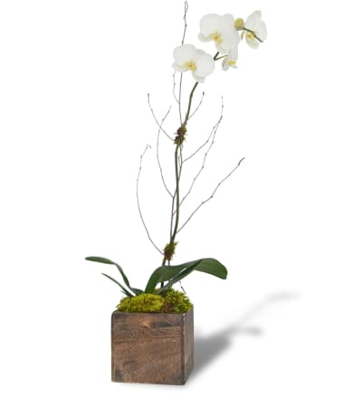 Simple Orchid Bloom