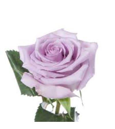1 Dozen Lavender Long Stemmed roses in a vase