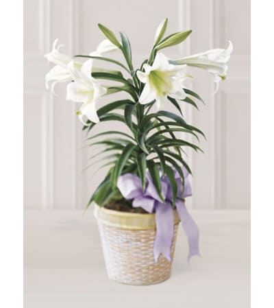 Single Stem Easter lily