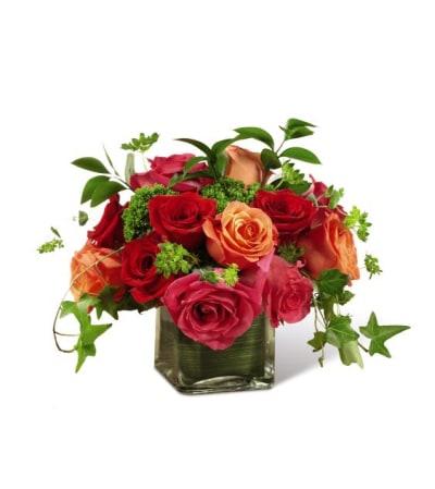 Petra Lush Life Roses